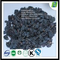 Dried black currant p.e 5%-25% for HPLC
