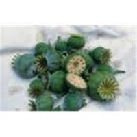 Best Poppy capsules wholesale