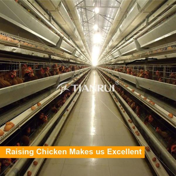 chicken cage7.jpg