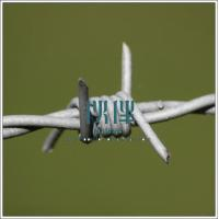 China China Fencing supplier,PVC Coated Barbed wire fence,Double Twist Barbed Wire fence on sale