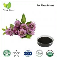 Quality anti cancer red clover extract p.e.,red clover flower extract for sale