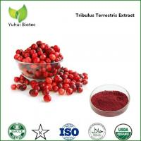 Quality cranberry extract proanthocyanidins,cranberry fruit powder,dried cranberry extract powder for sale