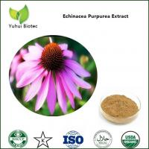 Quality echinacea purpurea extract powder,echinacea purpurea herb extract,echinacea powder for sale