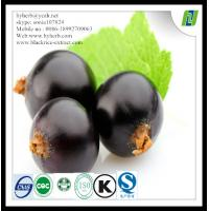 Food Grade Organic Black Currant Powder