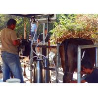 Small Aluminum Bucket Milking Machine For Milking Cows , Sheep