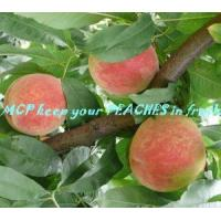 Quality 1-Mcp Freshening Agent for sale