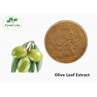 Quality Pure Powder Herbal Plant Extract / 40% Oleuropein Olive Leaf Extract Anti - Aging for sale