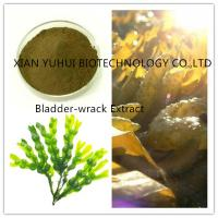 Quality bladder-wrack extract, bladder wrack extract,wrack extract, wrack powder for sale