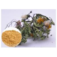 Quality Flavones Dandelion Root Extract Powder For Diuretic Whole Herb Extraction for sale