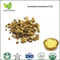 Quality scutellaria baicalensis georgi extract,Baical Skullcap root extract for sale