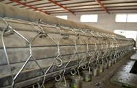 Quality 2.7mm/3.4mm  hot dipped Galvanized Gabion Box /gabion mesh/gabion mattress with 270g /m2 for sale