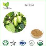 Quality Noni Extract,noni powder,noni fruit extract,noni p.e,noni fruit powder for sale