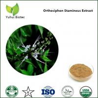 Quality Orthosiphon Stamineus P.E.,Java Tea extract,Clerodendranthus spicatus extract for sale