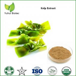Quality brown algae extract,kelp extract powder,kelp extract fucoxanthin,dried kelp powder for sale