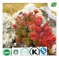 rhodiola rose extract wtih Rosavins 3% and Salidrosides 3% by HPLC