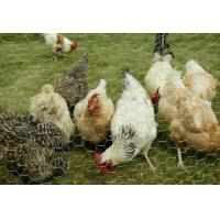 Chicken Mesh Hexagonal Wire Nettng