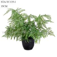 Quality Simulated Fake Fern Tree , Fake Outdoor Ferns Easy To Care With Ceramic Like Pot for sale