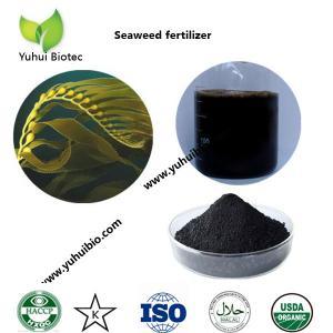 Quality best seaweed fertilizer,liquid kelp organic seaweed fertilizer, seaweed base fertilizer for sale