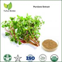 Quality Purslane Seeds Extract,Portulaca Oleracea P.E.,Portulaca Oleracea Extract 4:1 5:1 10:1 for sale