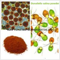 Quality dunaliella salina, Beta Carotene powder,Beta Carotene 5%,Beta Carotene 2.5% for sale