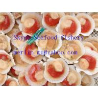 Best Frozen seafood processor,manufacturer,factory,supplier,producer,exporter wholesale
