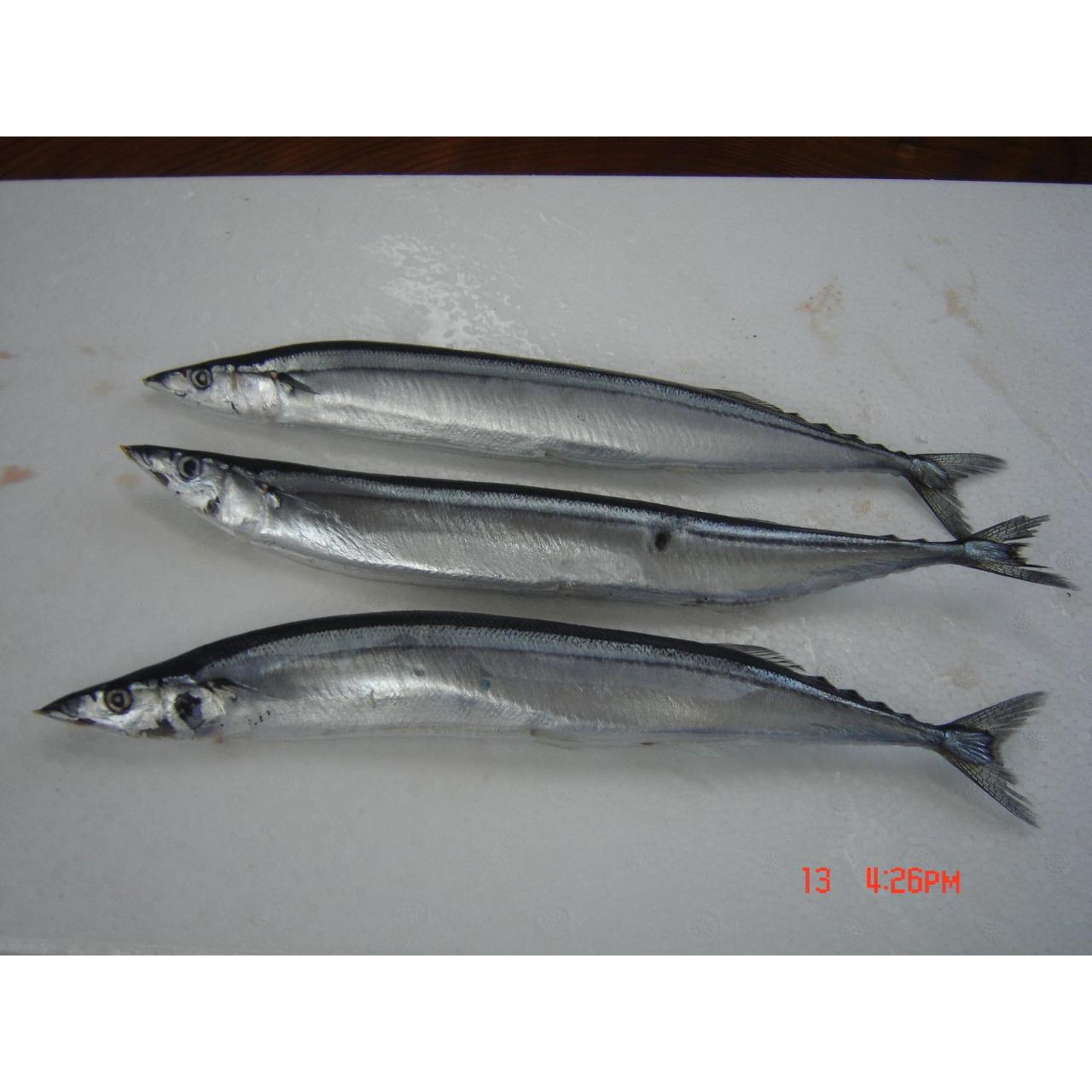 Fish Pacific saury
