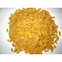 Best Golden Raisin wholesale