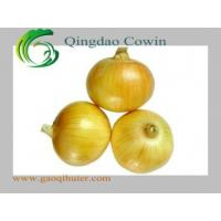 Quality Yellow onions for sale