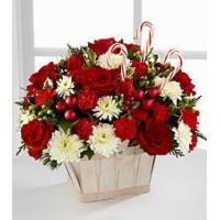 Quality Red Carnation NO.51 taipei flower delivery for sale