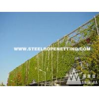 Quality Stainless Steel Cable Mesh Green plant climbing rope netting for sale