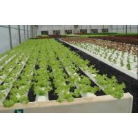 Quality Leaf Vegetable Greenhouse for sale