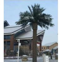 Quality Date Palm Tree for sale