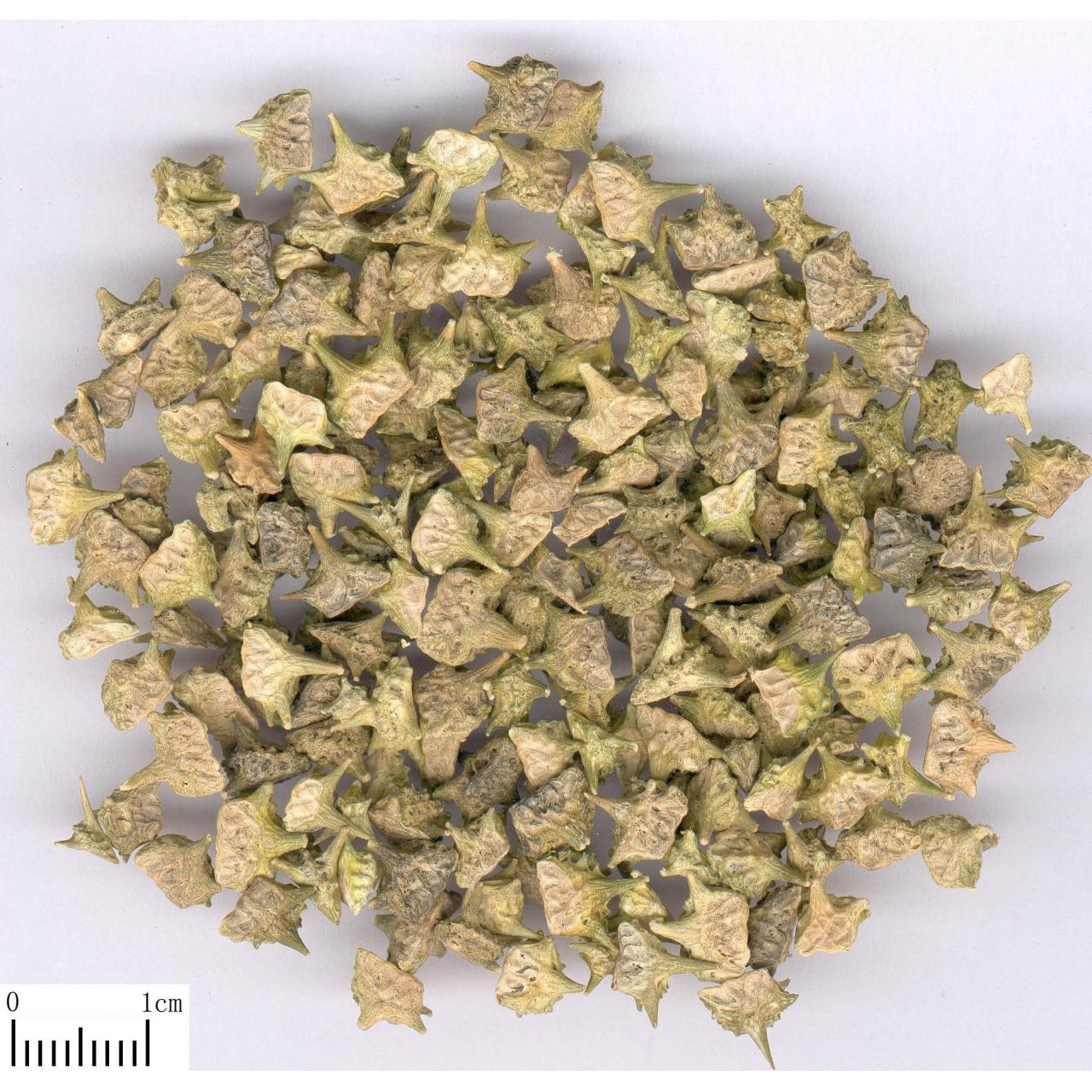 Broom Cypress Extract Extract by Rate