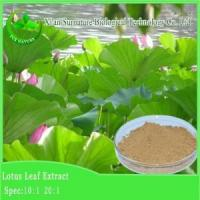 Quality Weight Loss Lotus Leaf Extract for sale