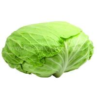 A 01 Oblate big cabbage