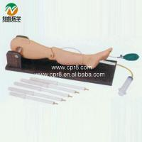 Quality Bone puncture and femoral vein puncture training model for sale