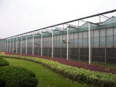 China Tempered Glass Greenhouse