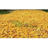 Buy cheap Yellow Corn Maize from wholesalers
