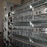 Broiler cage system with H type