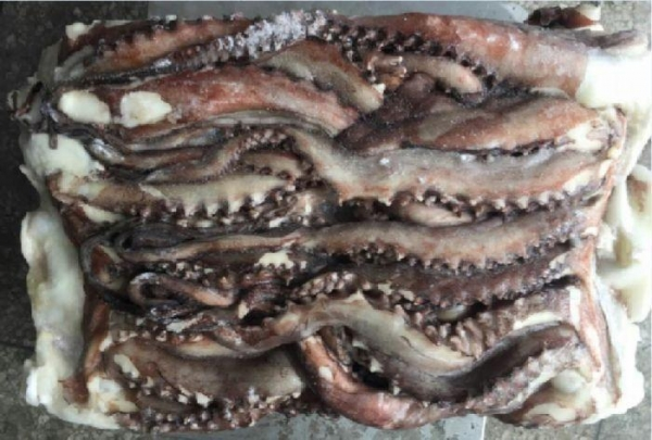 Buy Frozen Squid Arms Squid Tentacle at wholesale prices